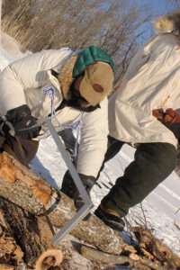 Sawing firewood becomes a routine job in a winter camp. Big bow saws are the best tool for the job.